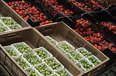 Many Containers of Gooseberries and Strawberries at a Market