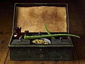 Aloe-Vera-Triebe in alter Apothekerschachtel