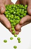 Peas Spilling From Hands