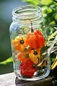 Habaneros in a Glass Mason Jar, Outdoors