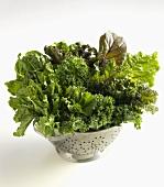 Verschiedene Kohl- & Gemüseblätter im Seiher