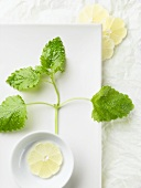 Lemon Balm Sprig with Lemon Slice