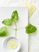 Ein Zweig Zitronenmelisse und geschälte Zitronenscheiben