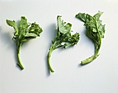 Fresh Broccoli Rabe on a White Background