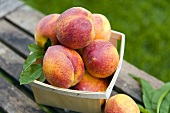 Basket of Fresh Peaches; Outdoors