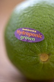 Indoors Hydroponic Grown Lime; Close Up