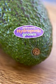 Indoors Hydroponic Grown Avocado with Sticker