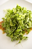 Micro Green Sprout Salad