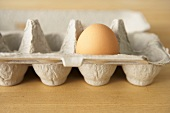 One Brown Egg in a Cardboard Egg Carton