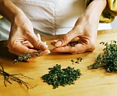 Hands Removing Thyme Leaves From Stems