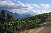 Franschhoek Wine Area, South Africa