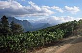 Franschhoek Wine Area, South Africa