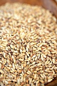 Victory Barley Beer Malt, Close Up