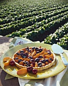 A Cherry and Apricot Tart with View