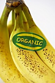 A Bunch of Organic Bananas