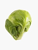 A Single Brussels Sprout