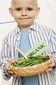 Little Boy Holding a Basket of Organic Beans