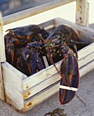 Live Lobster in Wooden Basket