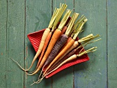 Karotten verschiedener Farbe in roter Schale (Draufsicht)