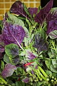 Bunches of red salad leaves