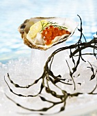 Oyster with Roe on Ice