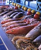 Various Fresh Seafood on Ice