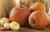 Autumn Scene with Assorted Pumpkins