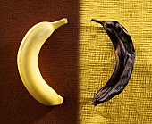 Two Bananas; One Fresh; One Rotten