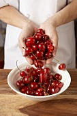 Hands Dropping Cherries into a Bowl