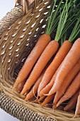 Farmers Market Carrots in a Basket