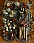 Various Shellfish on Seaweed