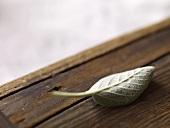 Single Sage Leaf on Wood