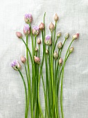 Chives with Blossoms