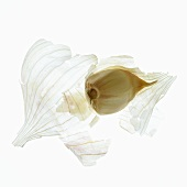 Garlic Clove with Peel