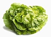 Ein Kopfsalat