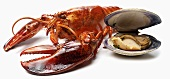 Lobster and Clam on a White Background