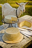 Three Assorted Cheeses on Outdoor Table; Goat