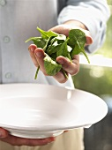 A Handful of Baby Spinach Over a White Bowl