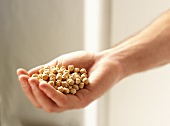 Hand Holding Dried Chick Peas