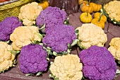 Purple and Yellow Cauliflower on a Farm