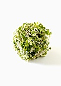 Ball of Sprouts on White