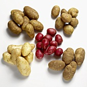 Variety of Potatoes on White Background