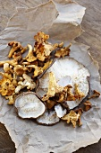 Assorted Wild Mushrooms on Paper Bag