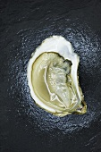 Half of a Bluepoint Oyster