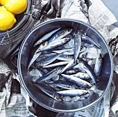 A bowl of fresh sardines on newspaper with lemons