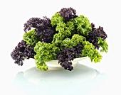Grünkohlblätter, violett und grün
