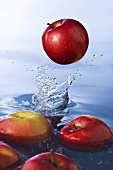Red Apples Splashing into Water; Apples Floating in Water