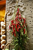 Red Peppers and Garlic Hanging on a Wall; Florence, Italy