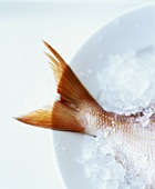 Red Snapper Tail on Ice