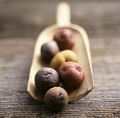 Assorted New Potatoes on Wooden Scoop